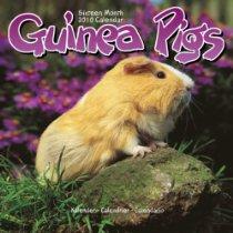 2010 Avonside Catalog