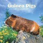 2010 Large Browntrout Calendar